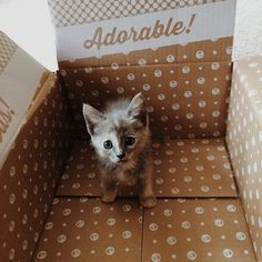 Leticia B.'s kitty is, in a word, adorable! Click for more cute creature styles. #meowmonday