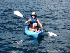 Kayaking dog: Minnie the Westie goes kayaking!