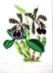 vintag printabl, botan printabl, botan work, botanical prints, botan illustr, flowersfruit illustr, botan art, botan flower, black