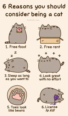 6 Reasons To Consider Being A Cat #humor #lol #funny