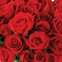 Bulk Roses - RED.  Starting at $131.95.  Description:   A 50-60 cm. multi-petaled blossom that ranges in size. Comes as a single flower atop a thorny stem from 12-40 inches high. Stem size and blossom count varies, depending on the variety.