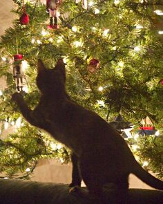 The magic of Christmas for the fur babies too.