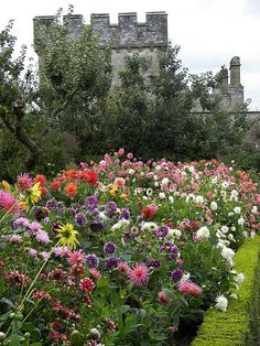 Lismore Castle gardens looking marvellously coloured