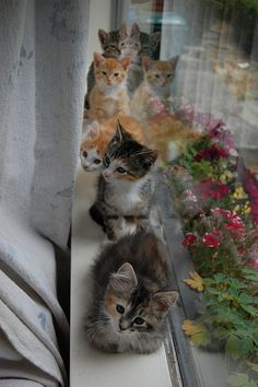 Cats love windows... #cat #humor #cats #funny #quotes #meme #lolcats #cute =^..^= www.zazzle.com/kittyprettygifts