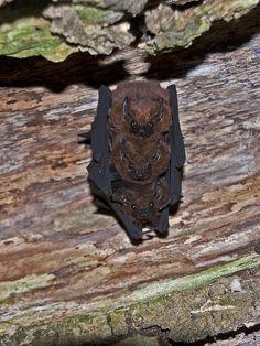 3 bats