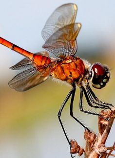 What a great macro photo! Check out the fantastic details on this little dragonfly. What do you think of this one? http://bit.ly/nvO5pd