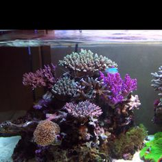 want a salt water tank :)
