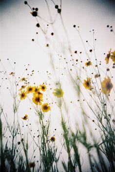 Sweet Wild Flowers