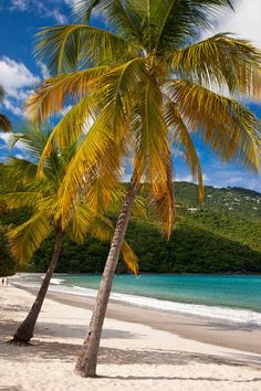 Magens Bay Beach - St. Thomas, U.S. Virgin Islands