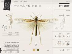 Insect Definer - Yael Cohen