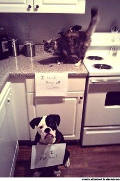 I swear my cat and dog do the same thing