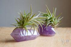 Plant on Amethyst Crystal Tiny Terrarium by FalconandFinch, $22.00
