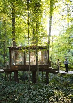 Peter's Tree house