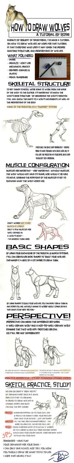 Wolf Drawing Tutorial by Junryou-na-Kokoro.deviantart.com on @deviantART
