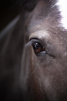 """Horses are the windows to our souls.""                               ~Anonymous"