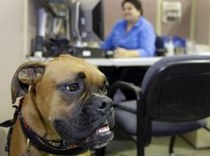 NPR. Workplace dogs and collaboration.