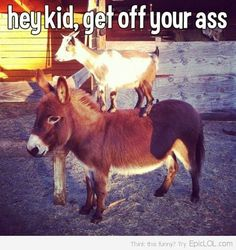 Hey kid, get off your (donkey) #ag #humor