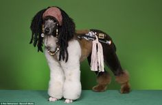 poodle grooming art - Google Search