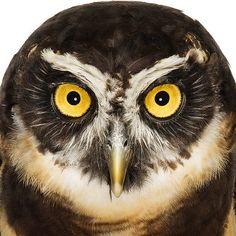 Owl Pinned by www.myowlbarn.com