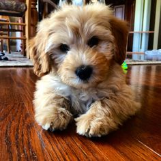 This #puppy looks like something you would make a Build-A-Bear! #socute #adorable #pets