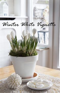 A pretty yet simple white vignette with crocus bulb flowers. The perfect decoration for a winter day. http://www.songbirdblog.com