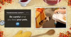 If your #pet isn't used to eating table scrap, don't choose #Thanksgiving, the biggest meal of the year, to start. #StaySafe #ADT #PetSafety #FoodSafety