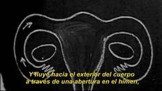 LA LUNA EN TI: Un secreto demasiado bien guardado on Vimeo