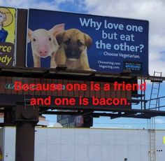 animal lovers, animals, friends, funny signs, funni, pigs, bacon, dog, true stories