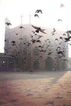 photographed by Etienne Roudaut - pigeons in india