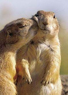 happy friday, a kiss, first kiss, prairi dog, dogs, 25th anniversary, squirrel, animal, kisses
