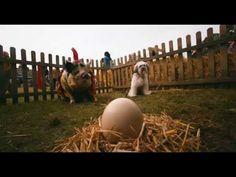 Pudsey The Dog: The Movie - Latest Trailer [Vertigo Films] [HD] ...