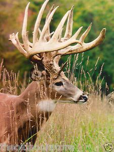 Monster Whitetail Deer Pictures | Monster Typical Dream Whitetail Deer Taxidermy & Hunting & Antlers