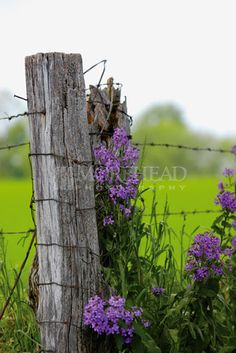 old fence post with flowers