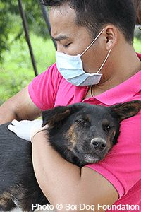 Feed Dogs Rescued from Illegal Meat Trade at The Animal Rescue Site