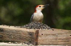 7 DIY Recycled Bird Feeders - Earth911.com