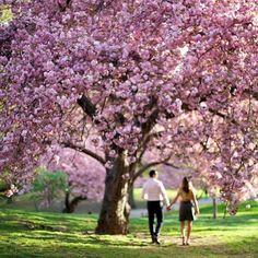 Spring Engagement