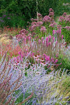 Perennial border with Perovskia Blue Spire, Echinacea Rubinstern, Lythrum Fire Candle and Eupatorium purpureum - Lady Farm, Somerset