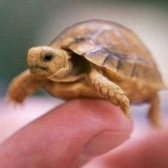 Tortoise-I really want one