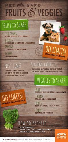 Pet safe fruits and vegetables.