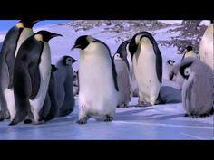 Penguin Fail - Bloopers :D