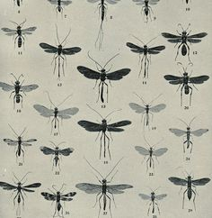 antique insect paper