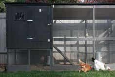 stephmodo: A Modern Chicken Coop