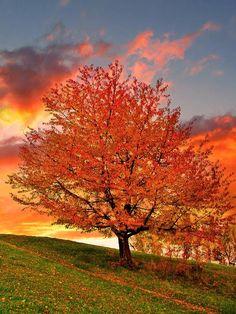 """The Magic Tree"""