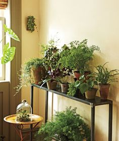 Not sure what to do with a corner of your home? Transform it with an indoor garden. (It's easier than you'd think!)