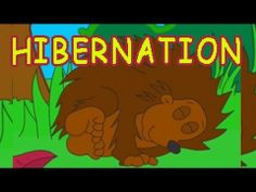 ▶ Why do animals hibernate? - YouTube For more pins like this visit: http://pinterest.com/kindkids/music-and-videos-charlottes-clips/