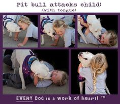 Pitbull attacks child! (with tongue)