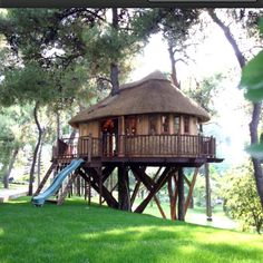 awesom tree, house design, trophi treehous, tree houses, normal hous, tree homes, treehous cabin, kid, amaz tree
