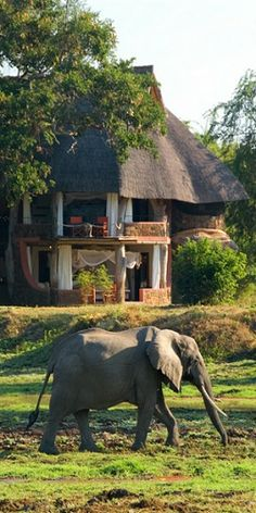 Staying in luxury safari huts with animals right on your doorstep.