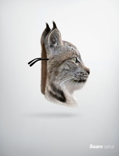 Sears Optical: Lynx