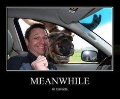 moose photobombing